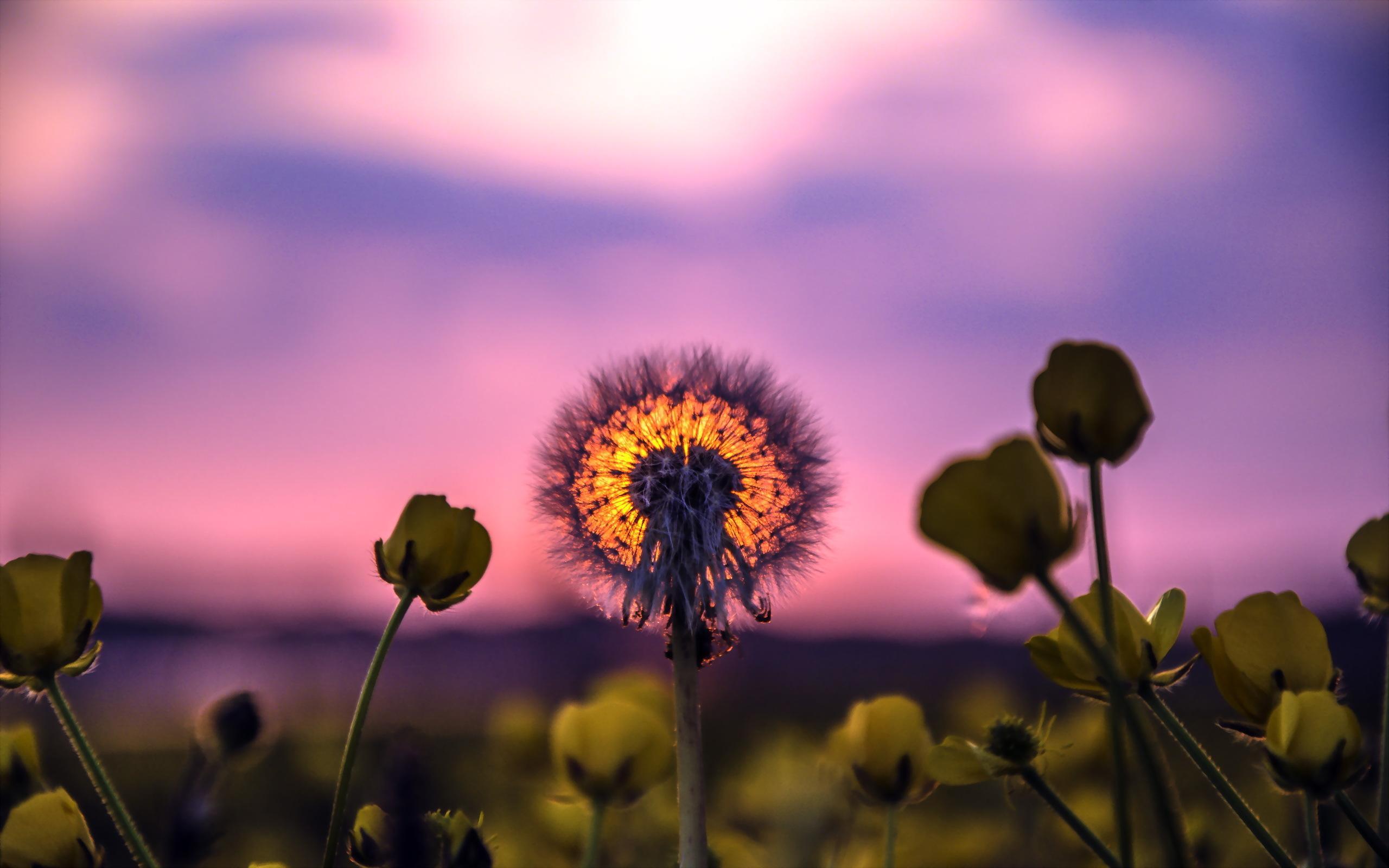 Lindo florecimiento frente al sol fondo de pantalla HD